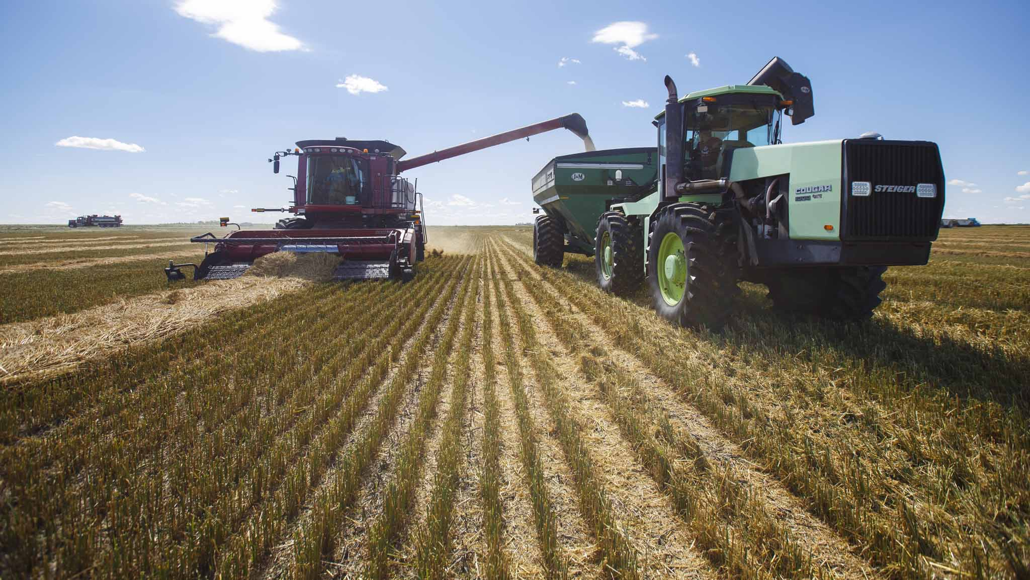 Colin expects to harvest 300,000 bushels over 4,000 acres this fall.