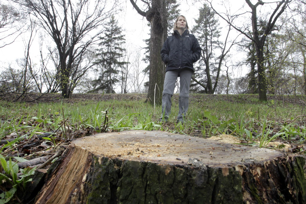City forester Martha Barwinsky says Kildonan Park has lost a high number of elm trees due to Dutch elm disease. Most of them are near the Red River.