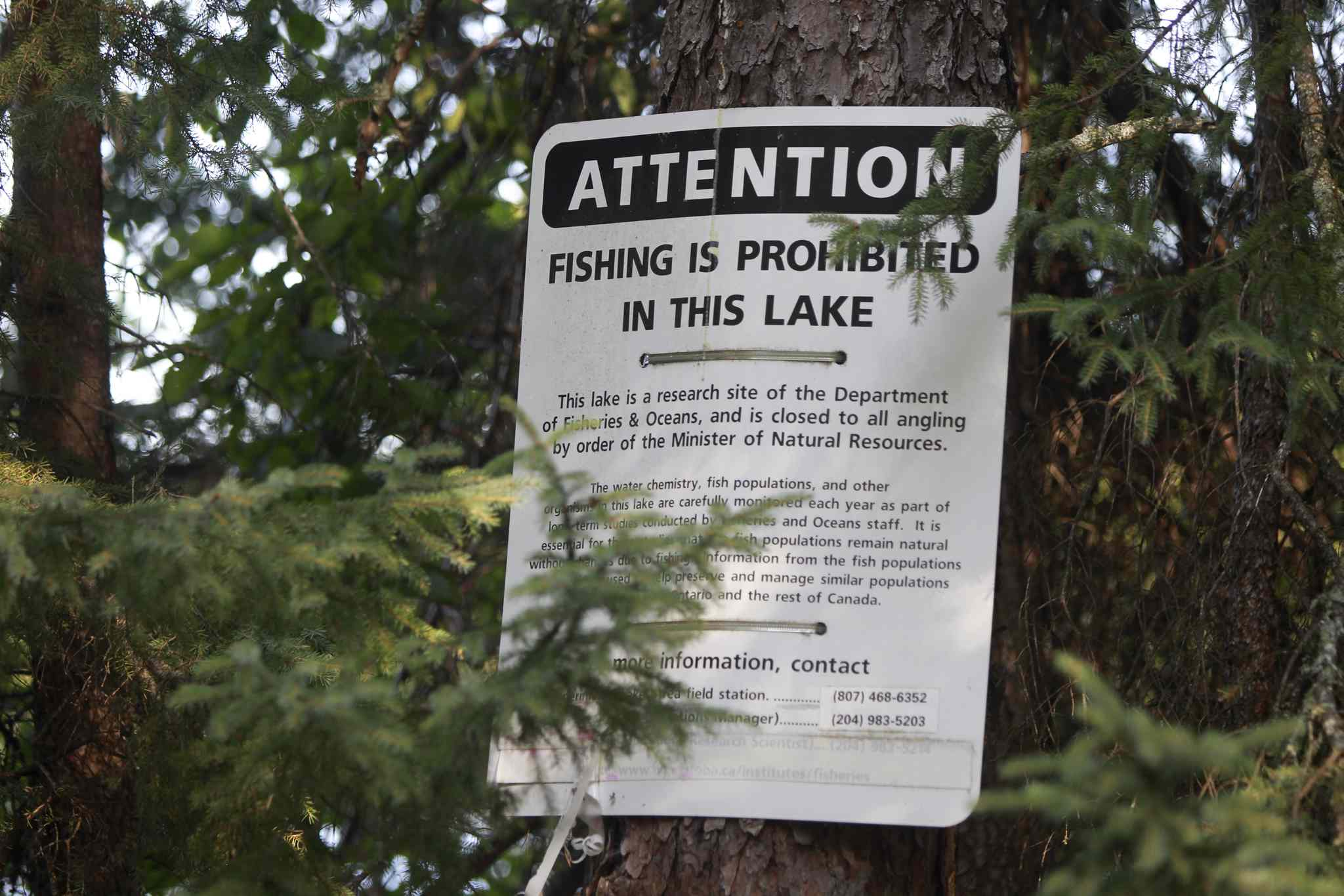 A sign by lake #239 in the Experimental Lakes Area.