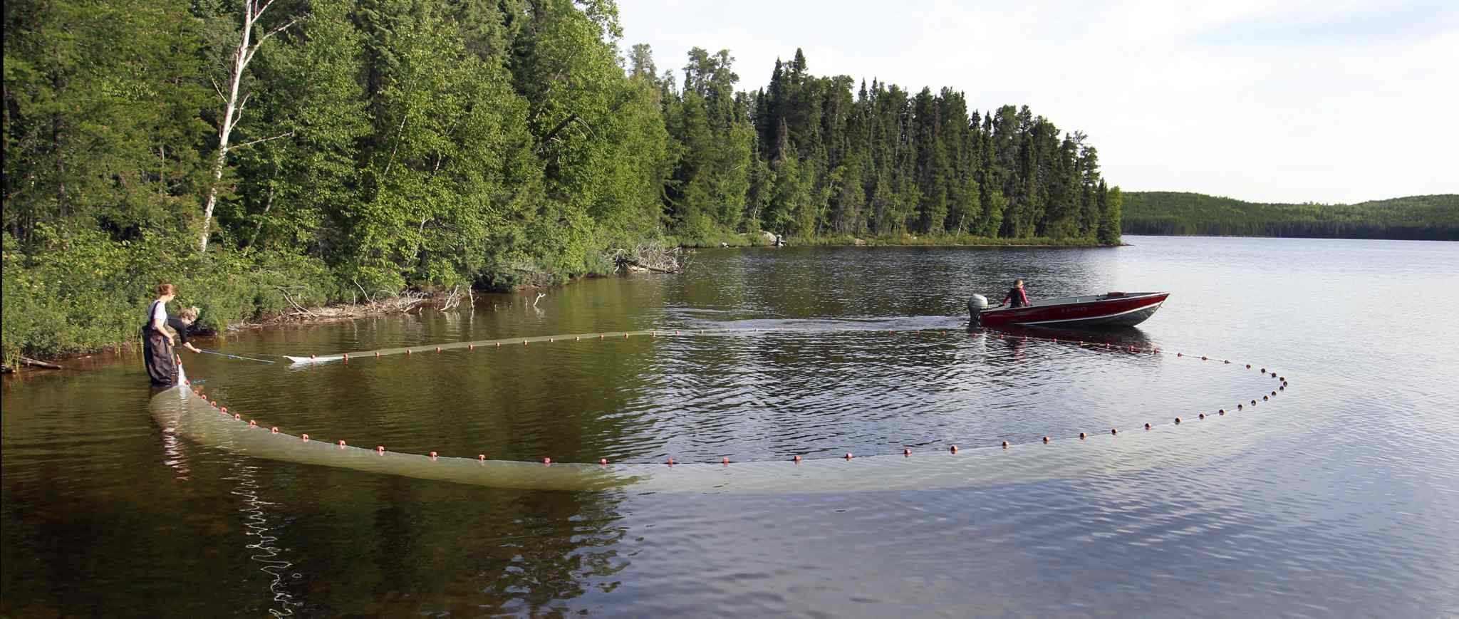 Researchers use a seine net to catch fish on Lake # 239 part of the Experimental Lakes Area.