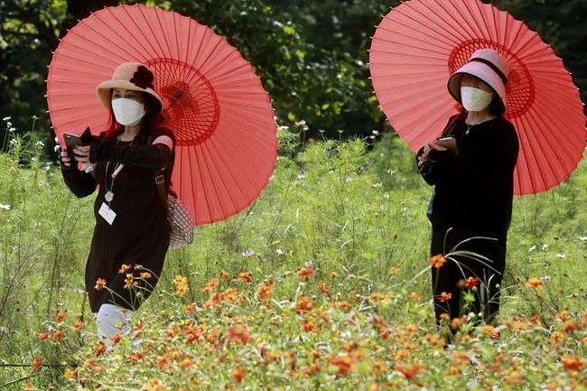 People wearing face masks to protect against the spread of the coronavirus enjoy the field of cosmos at the Hamarikyu Gardens in Tokyo, Tuesday, Sept. 21, 2021. (AP Photo/Koji Sasahara)