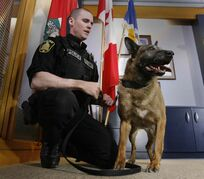 Winnipeg Police Service Dog Judge, seen here in 2014 with his handler Patrol Sgt. Scott Taylor, was laid to rest Wednesday.