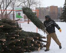 Terry Kessler taking his Christmas tree to the recycling depot at St. Vital Park on Saturday. Photo by