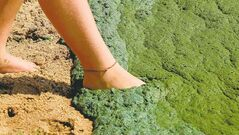 Documentary-maker Paul Kemp has investigated the scourge of algae blooms in Lake Winnipeg.