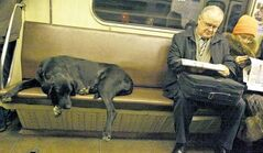 Stray dogs in Moscow are smart enough to use public transport, a fact accepted by Muscovites who don't crowd them on the subway.