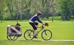 A dog keeps a lookout from a carrier pulled by a cyclist in Assiniboine Park Sunday morning.