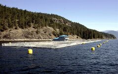 A fish farm is pictured in August 2004 in Jervis Inlet B.C. THE CANADIAN PRESS/Chuck Stoody