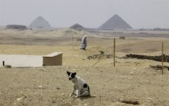 A stray dog scavenges for food at the historical site of the Giza great Pyramid, right, and the Bent Pyramid of Dahshur, left, at the Saqqara archaeological site, 30 kilometers (19 miles) south of Cairo, Egypt, Thursday, May 8, 2014. Egypt's vital tourism industry has suffered in the wake of the 2011 uprising that toppled autocratic leader Hosni Mubarak. (AP Photo/Amr Nabil)