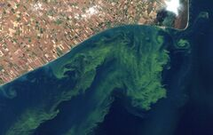 FILE - This Oct. 5, 2011 file satellite photo provided by NASA shows algae blooms on Lake Erie. U.S. Agriculture Secretary Tom Vilsack announces a new program under which the federal government will spend $1.2 billion over five years supporting conservation projects designed by universities, private companies, nonprofits and other local partners. An April, 2013, study said the warming climate and modern farming practices are creating ideal conditions for gigantic algae formations on Lake Erie. (AP Photo/NASA, File)