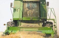 Alan Kirk manoeuvres his combine across a field of canola near Sanford.
