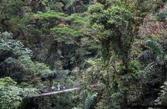 In this aerial view, tourists can be seen at the Arenal Hanging Bridges Park in Costa Rica.