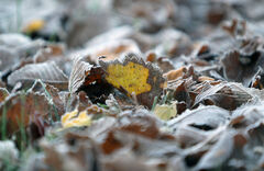 Frost-covered leaves signal the start of a chilly Thanksgiving weekend on Saturday morning.