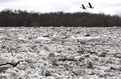 A huge ice jam near Selkirk Park Monday.