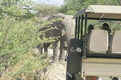 Steve Haggerty / MCT 