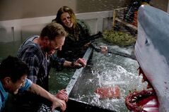 In this image released by Syfy, Ian Ziering, second left, and Cassie Scerbo battle a shark in the Syfy original film
