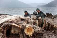 Eddie Samms, left, and Aaron Thom work to cut up the carcass of a blue whale in Woody Point, N.L., on Sunday, May 11, 2014. THE CANADIAN PRESS/Paul Daly
