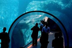One of many observation areas, where visitors can watch polar bears play and explore underwater.
