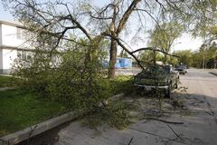 Downed tree on  Waterloo Street at Corydon Avenue  Tuesday morning shows force of wind on Monday night.