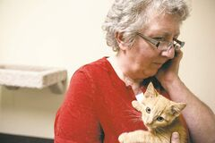 Lynne Scott of Craig Street Cats cradles Sammy, a kitten she rescued after it was thrown from a truck. She has more than 100 cats boarding in her home.