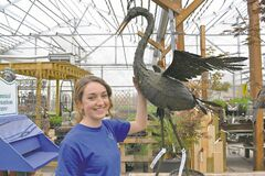 Samantha McKee, an employee of St. Mary's Garden Centre, says cranes for outdoor garden or lawn ornaments are a new item at the nursery.