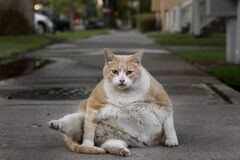 Norm isn't the most graceful of felines, but the fat cat has won plenty of admirers.