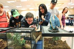 Visitors to the Manitoba Reptile Breeder's Expo take a closer look at one of the tarantulas on display.