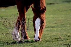 It's a good idea to check with your vet prior to deworming your horses.
