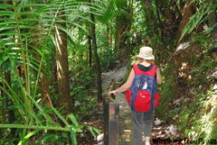 The Big Tree Trail in El Yunque National Forest takes visitors down to the spectacular La Mina waterfall.