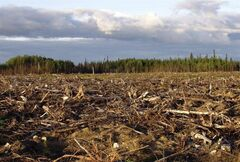In this undated photo provided by the International Boreal Conservation Campaign, the forest is seen after being clear cut in the southern regions of Quebec's Boreal Forest. THE CANADIAN PRESS/AP,HO Matt Medler