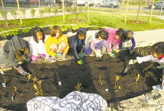Earl Grey students plant grasses and shrubs as part of Phase 1 of the school's grounds beautification project/outdoor learning centre.