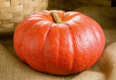 The pumpkin variety, Rouge Vif d�Etampes, originated in France and has served as the prototype for Cinderella�s pumpkin carriage. The unique flat shape and brilliant red-orange colour of this heritage pumpkin variety has endeared itself to generations of pumpkin lovers. (Photo credit: JohnnySeeds.com)