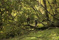 Two brothers play on a tree that was blown over in a storm on Hampstead Heath in north London, Monday, Oct. 28, 2013. A major storm with hurricane-force gusts has lashed southern Britain, causing flooding and travel delays including the cancellation of roughly 130 flights at London's Heathrow Airport. Weather forecasters say it is one of the worst storms to hit Britain in years. (AP Photo/Matt Dunham)