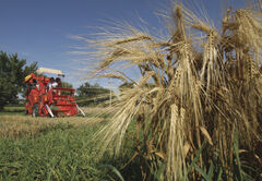 A big rebound in agriculture, with strong growth in mining, manufacturing and construction, is expected to keep Manitoba's economy humming in 2012.