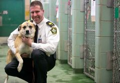 Winnipeg Animal Services' Leland Gordon with Buddy, a shepherd cross up for adoption. An impounded dog now has a 94 per cent chance of avoiding a lethal injection.