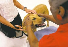 Keri Wiginton / Chicago Tribune