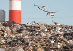 2,600 tonnes of organic waste will be diverted from the Eastview Landfill every year.