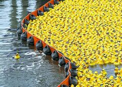 Several hundred of the 28,000 rubber ducks escape the boom and floated around Dyes Inlet in Silverdale, Wash., during the annual Great Duck Race, a fundraiser held by the Rotary Club of Silverdale, during the Whaling Days festival, Sunday, June 30, 2006. (AP Photo/Kitsap Sun, Carolyn J. Yaschur)