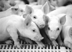 Fred Greenslade / WINNIPEG FREE PRESS ARCHIVES 