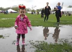 Harlow Woods, 2, sports bear ears while exploring a puddle at the 28th annual Teddy Bears' Picnic at Assiniboine Park. The annual event is a fundraiser for the Children's Hospital Foundation of Manitoba.
