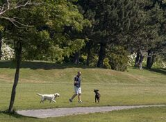 Dogs run through a park in Africville, a national historic site, in the northend of Halifax on Saturday, July 12, 2014. After being petitioned by the Africville Heritage Trust, the city agreed to decommission the off-leash dog area but but not until a replacement site can be found nearby. THE CANADIAN PRESS/Andrew Vaughan