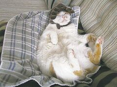 Mr. Stanley