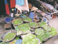 A street vendor  offers a vibrant collection of greens at the Hoi An market in Vietnam.