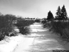 Deer tracks can be seen on the Assiniboine River at Preeceville, Sask., the closest town to the river's source.