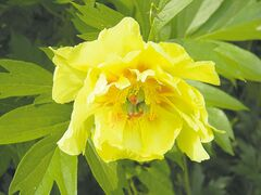 Sandra Venton 