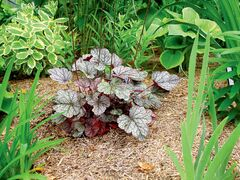 Brenda Newton