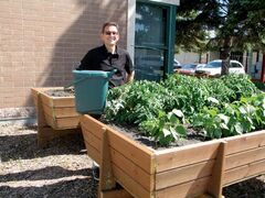 SOSD secretary-treasurer Wayne Shimizu stands next to an organic waste container and garden behind the SOSD head office (830 Powers St.). Shimizu is the inaugural recipient of the Grey Owl Award, which recognizes practices and ideas that contribute to school divisions in Manitoba.