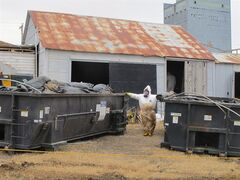 In this photo taken on Wednesday, April 23, 2014, white-suited workers wearing respirators clean up the illegal filter sock dump in an abandoned gas station in Noonan, N.D., near the Canadian border. Radiological readings were to be conducted to be sure the building and soil was back to normal. (AP Photo/The Bismarck Tribune, Lauren Donovan)