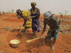 Women in Galma Commune in  south-central Niger dig a crescent moon to trap rain water as part of a work-for-food program.