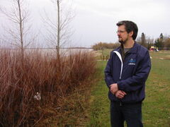 Armand Belanger, East Interlake Conservation District manager, inspects a willow stand that has stopped erosion on Lake Winnipeg, in Hnausa Provincial Park.