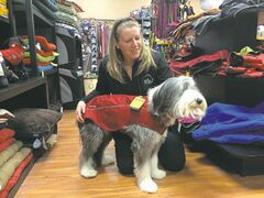 Now that the cold weather is here, you may want to ensure that Fido has warm clothes, too.